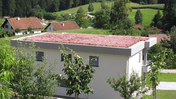 ekstenzivna ozelenitev zelene strehe