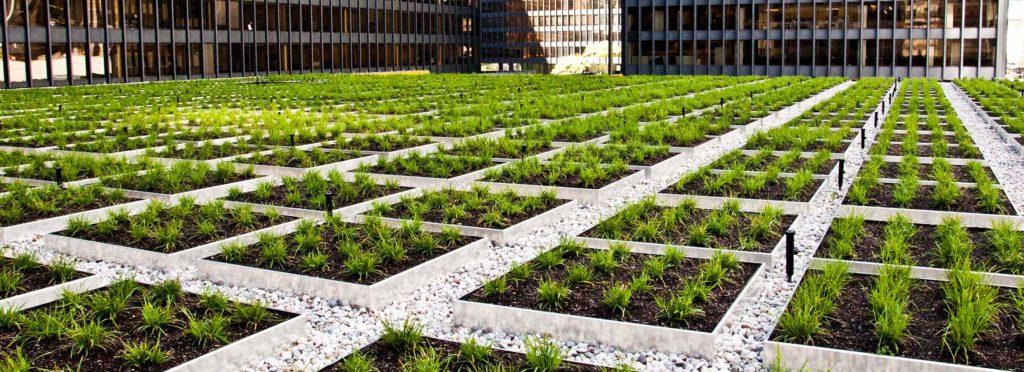 Zaradi pomanjkanja zelenic in vse večjih okoljskih problemov postaja zelena streha vse bolj priljubljena rešitev