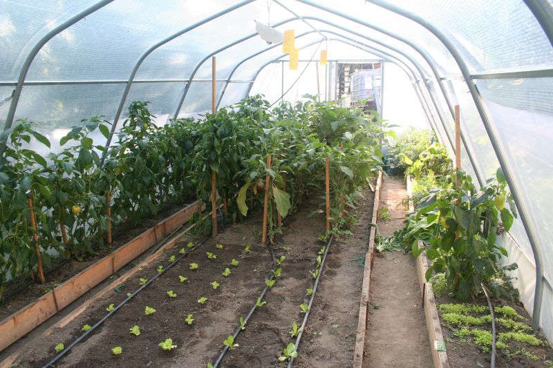 Namakalni sistemi za rastlinjake