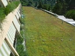 Zelena streha zelenitev