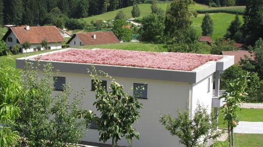 Zelene strehe v Sloveniji