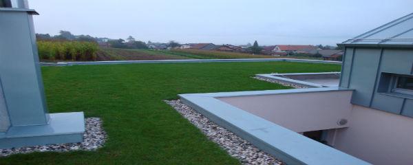 Detajl ekstenzivne zelene strehe
